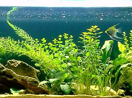 67 gallons planted tank (mostly live plants and fish) - 255 litre freshwater, 2 months olds