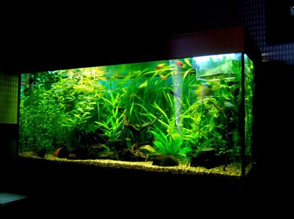 Rated #8: 90 Gallons Planted Tank - Rio 180 planted tank
