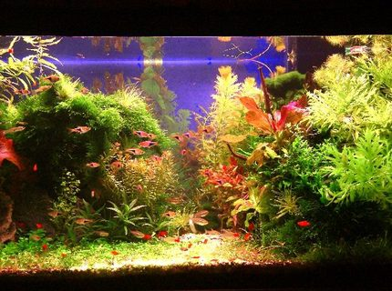 Rated #1: 50 Gallons Planted Tank - Wet, Sweat and Blood