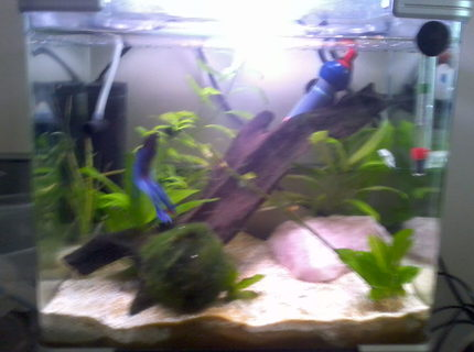 8 gallons planted tank (mostly live plants and fish) - 20ltr arc tank for betta