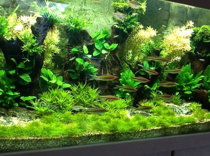 Rated #6: 130 Gallons Planted Tank - New ...