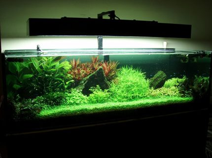 91 gallons planted tank (mostly live plants and fish) - My Tank..