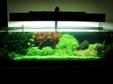 91 gallons planted tank (mostly live plants and fish) - fts..