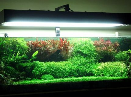 91 gallons planted tank (mostly live plants and fish) - This is how it turned out to be..