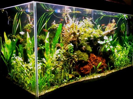 90 gallons planted tank (mostly live plants and fish) - 48 x 24 x 18 inches (low tech/ natural method) Latest image taken with java ferns.