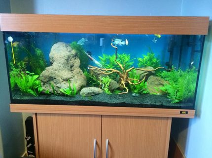 45 gallons planted tank (mostly live plants and fish) - tank  with wood