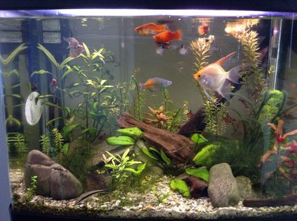 23 gallons planted tank (mostly live plants and fish) - A planted tank
