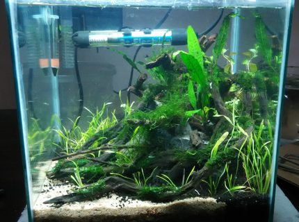 8 gallons planted tank (mostly live plants and fish) - Size: 1 x 1 x 1 ft