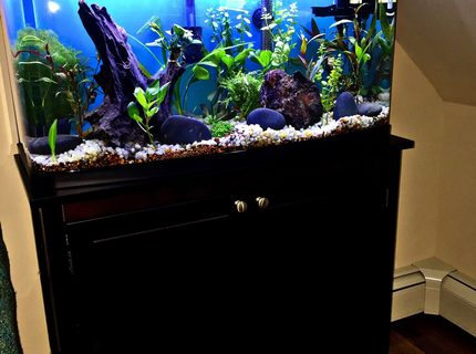 23 gallons planted tank (mostly live plants and fish) - 23g (high),