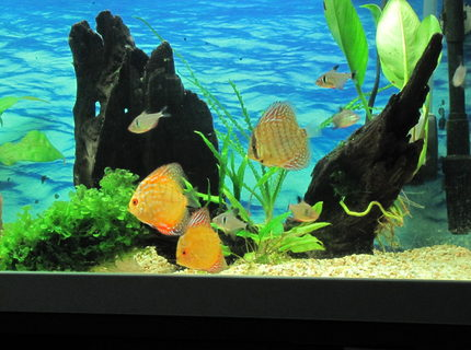 45 gallons planted tank (mostly live plants and fish) - 160 Liter tank 100*40*40