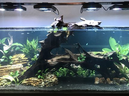 180 gallons planted tank (mostly live plants and fish) - My 180