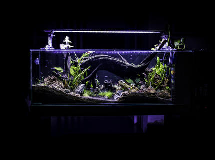 53 gallons planted tank (mostly live plants and fish) - front view of my neon´s tank