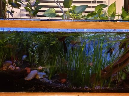 36 gallons planted tank (mostly live plants and fish) - planted 75