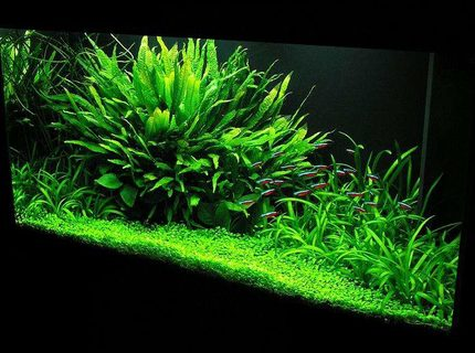Rated #3: 33 Gallons Planted Tank - 33 gal. Nature Aquarium