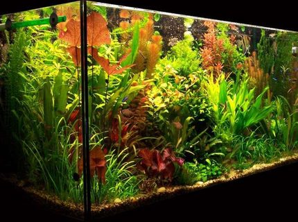103 gallons planted tank (mostly live plants and fish) - My planted aquarium-465 liter