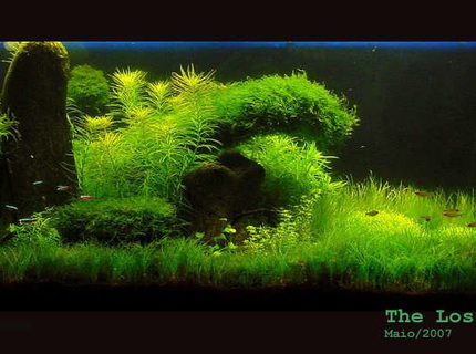 Rated #4: 65 Gallons Planted Tank - The Lost Island