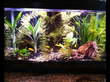 60 gallons planted tank (mostly live plants and fish) - my planted tank ive had for 3 months