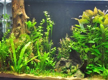 25 gallons planted tank (mostly live plants and fish) - 39 gallon