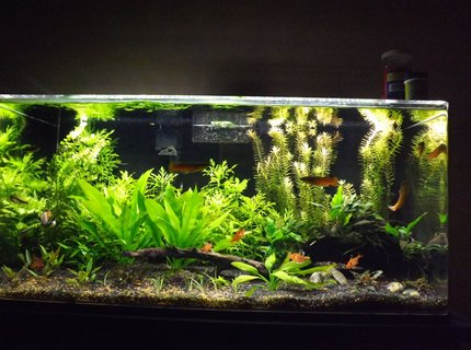 37 gallons planted tank (mostly live plants and fish) - 37 gallon acrylic tank, planted without co2, just trying to get the right balance of plants and fish. 25% water changes weekly, dosing with potassium, phosphorus and Flourish Excell weekly. Recently upgraded to a 36 in. LED plant light that's dimmable. I've found full power is too much light. Substrate is a fluorite type product and coarse sand.