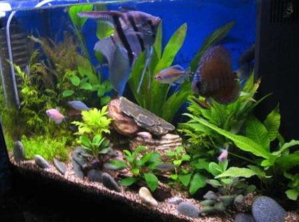 17 gallons planted tank (mostly live plants and fish) - Improved tank with DIY CO2.