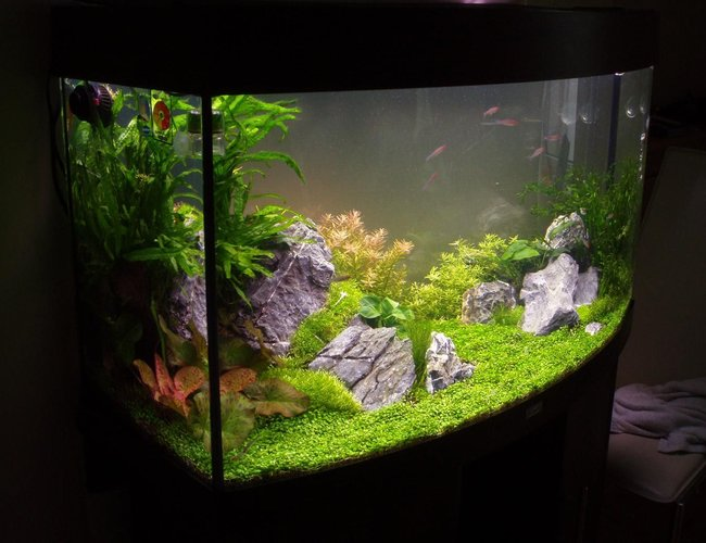 30 gallons planted tank (mostly live plants and fish) - 4 Weeks old at this point