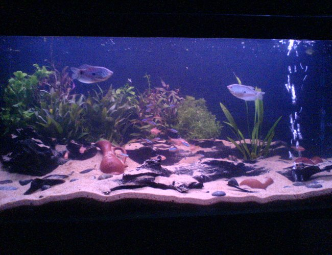60 gallons planted tank (mostly live plants and fish) - Ok I just took this pic will give a better one when I have a better cam