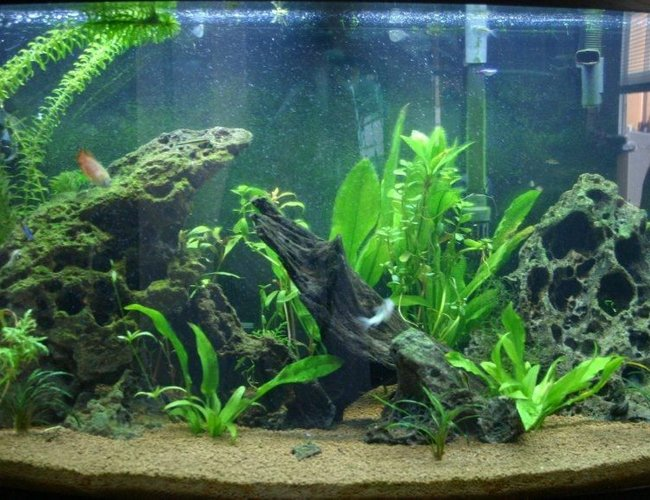 46 gallons planted tank (mostly live plants and fish) - Just getting back into fish tanks again, this is about 6 weeks into my first attempt at a freshwater planted tank.