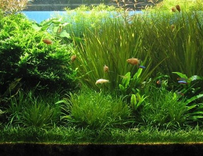 120 gallons planted tank (mostly live plants and fish) - Actuall look of my tank