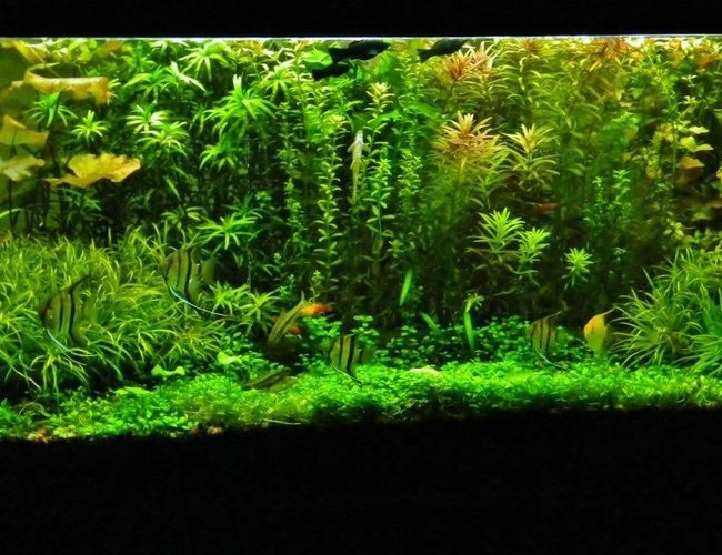77 gallons planted tank (mostly live plants and fish) - look for yourself....