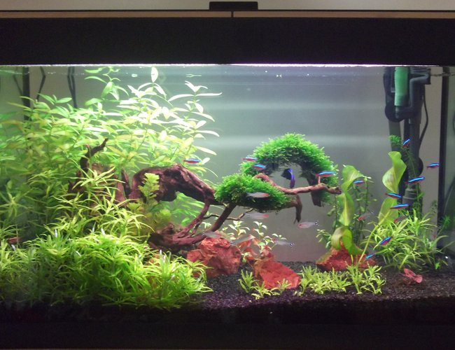 33 gallons planted tank (mostly live plants and fish) - 1st Planted Tank. Up and Running For 2 months.
