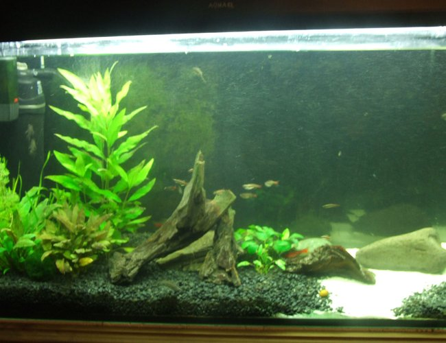 50 gallons planted tank (mostly live plants and fish) - Temperate, 50 gallon.