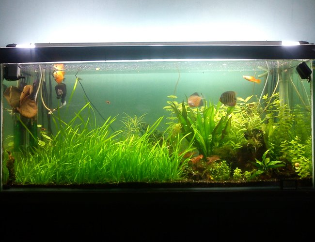 79 gallons planted tank (mostly live plants and fish) - my fish tank