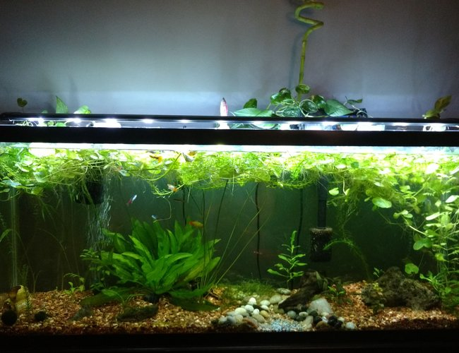 55 gallons planted tank (mostly live plants and fish) - Established one year old 55 gallon.
