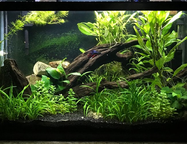 29 gallons planted tank (mostly live plants and fish) - My Planted Aquarium