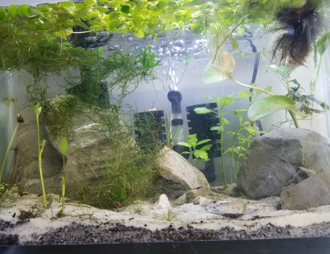 10 gallons planted tank (mostly live plants and fish) - Shrimp tank
