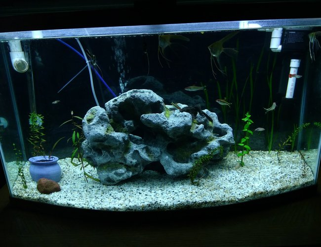 75 gallons planted tank (mostly live plants and fish) - My 46 bow front, newly planted.