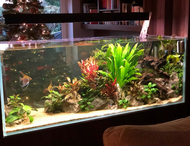 130 gallons planted tank (mostly live plants and fish) - Aquarium wall