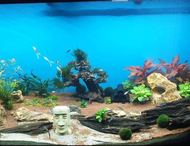 50 gallons planted tank (mostly live plants and fish) - .