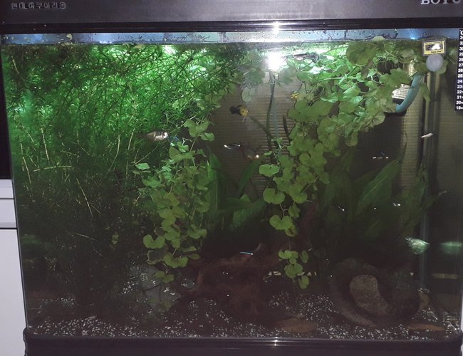 55 gallons planted tank (mostly live plants and fish) - 55 gallon