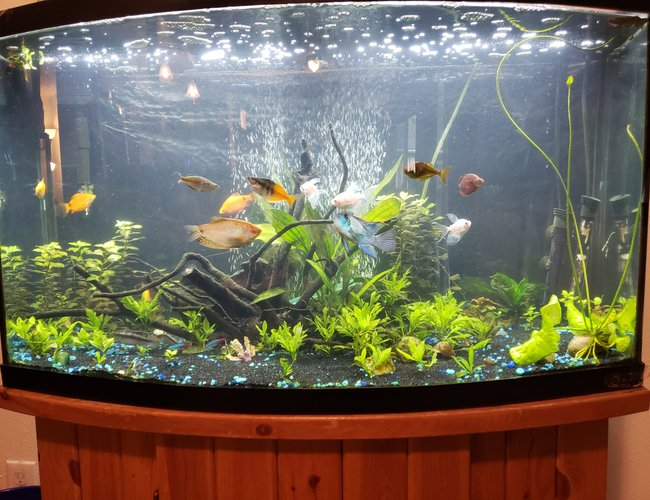 46 gallons planted tank (mostly live plants and fish) - Growing in well!