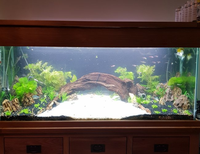 70 gallons planted tank (mostly live plants and fish) - Rescape