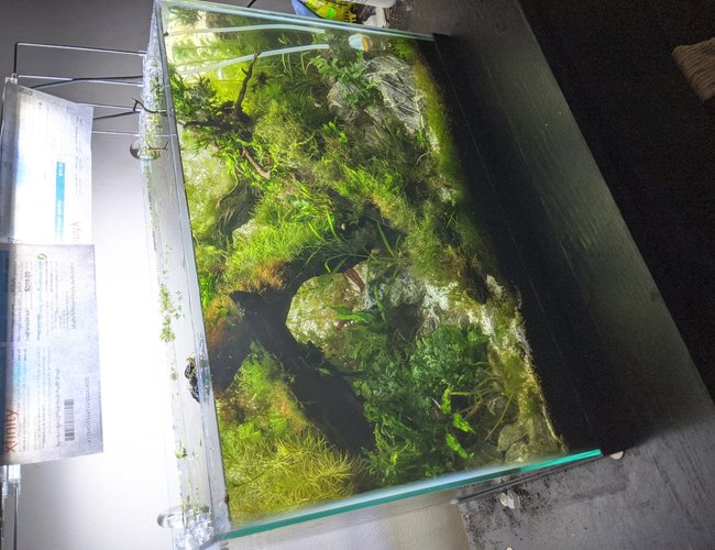 20 gallons planted tank (mostly live plants and fish) - 20 gallon, planted tank