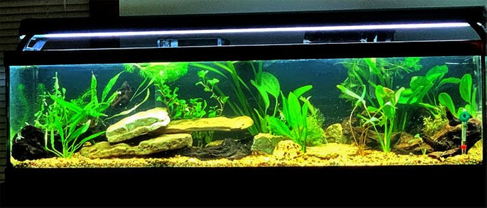 33 gallons planted tank (mostly live plants and fish) - fish to be stocked soon
