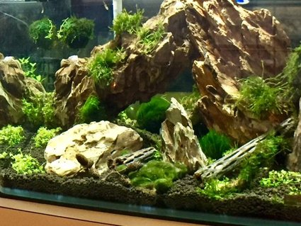 Rated #8: 150 Gallons Planted Tank - first aquascape. Dragon stone, weeping and flame moss. Planning on adding shrimp.