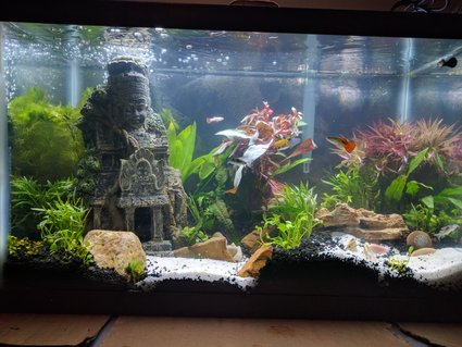 Rated #39: 10 Gallons Planted Tank - 3 day old 10 gallon tank. Trying to see about keeping a Betta with Guppies.