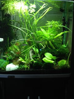 Rated #38: 30 Gallons Planted Tank - Me tank