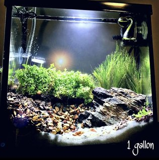 Rated #33: 1 Gallon Planted Tank - 1 gallon