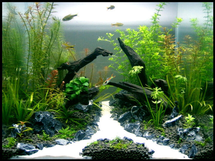 Rated #3: 30 Gallons Planted Tank - Tank: Aqua One 30cm Cube