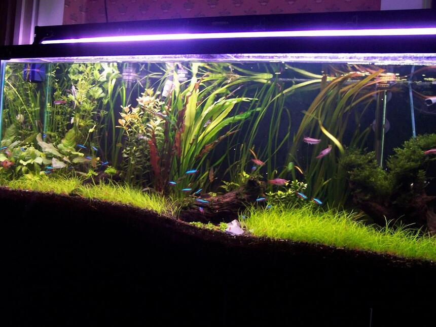 Rated #9: 55 Gallons Planted Tank - my private yard in my room