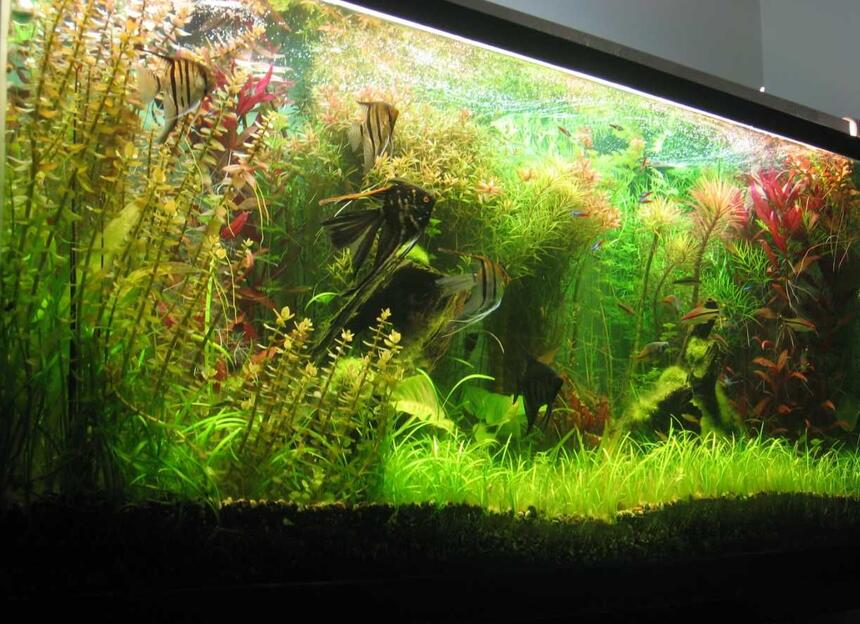 Rated #5: 140 Gallons Planted Tank - 140 gallons